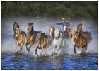 Water Horse Catching