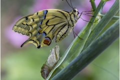 enfin libre - Machaon
